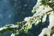 Winter Wonderland / Scenes of the winter season. / by Jill Nystul {One Good Thing by Jillee}
