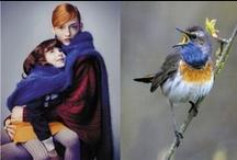 Colour Combo's / by Elise Verburg-Lai