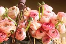 Flowers / by Nazrin Huseynzade
