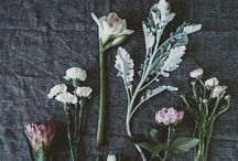 Flowery / All things flowers. / by Ashley Lusietto