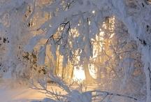 Winter / by Nazrin Huseynzade