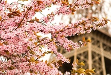 Spring / by Nazrin Huseynzade
