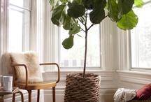 home inspiration / by julia grace