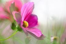 Flowers / Lovely flower images / by Connie Etter