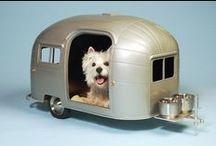 dog/cat / by marian lauffer