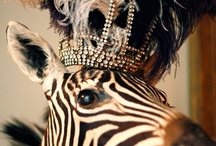 Circus Runaway, Carnivale & Masquerade / by Quirky Quaintrelle