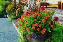 Garden and Flowers / by Yvonda Stevenson Ashcraft
