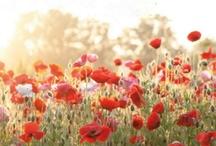 Fleurs. / by Sierra Delnort
