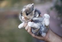 Bunny / by Megan Bowker