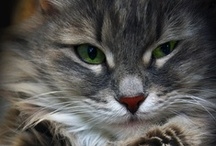 Cats / by Yanti Amos