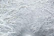 * A SEASON ~ of Winter * / by Karyn G