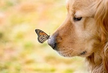 """dog days / """"We long for an affection altogether ignorant of our faults.                                                                 Heaven has accorded this to us in the uncritical canine attachment.""""  ~ George Eliot  / by Teresa Fields"""