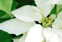 Blooms of White / by Julie Craig