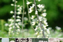 * JARDIN ~  Blanc * / Love a white garden . . . / by Karyn G