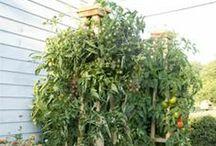Vegetable Gardening & Canning / by Mavis Reimer