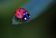 Ladybugs / by Eliana Lavayen