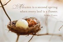 Autumn, I love you! / by Evelina Noni