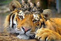 ~It's a Jungle out there!!!~ / Wild animals should be free......................... / by Kathylee