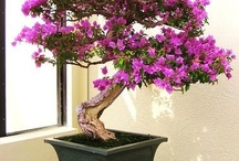 bonsai / by Tere Paez