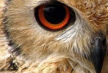 Owly / Owls / by Gillian Ley