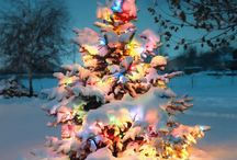 holidays. / by Macy Kalfs