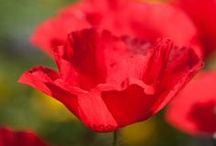 Flowers / by Ritu Saini