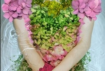 Home Health and Beauty Remedies / by Angela K