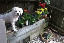 Things I Heart~Gardens / by Kim-Marie Mullin