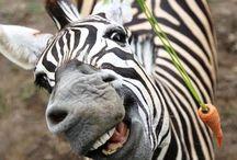 Zebra Stripes or Black/White  / by Jennie Hoffman-Crunk