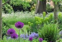 Woodland Gardens / by Lisa Lebeau