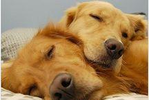 Dog Love / by Holly Hanson
