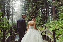 Brides & Wedding Gowns / by debra