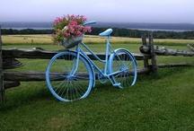 Bikes  / by debra