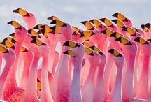 Pink / by Cheryl Reeves