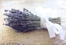 Herb and gardens / by Donna Schaner
