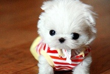 sooooo cute / by Kristen VanDenburgh