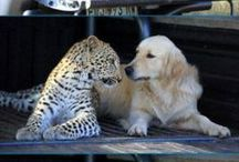 I love animals!!!!! / by Celina Pargas