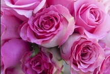 Reveal Weddings-Pink Hues / by Jenine Zoucha-Adams