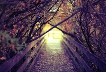 Falling into Autumn / by Cassy Gonzalez