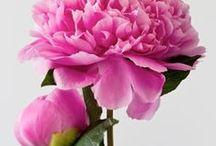 Flowers ♥ Les fleurs / by Raphaëlle Seraphina