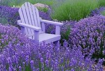 Yard and garden / by Tanya Tucker