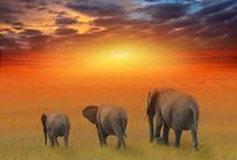 Africa / by Suzanne