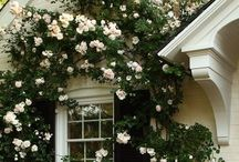 curb appeal / by Kristin S.