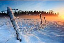 Winter / by Wendy Smith