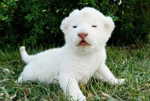 Albino animals / by Ginger Whitley