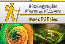 Plants & Flowers [Photography] / #Plants, #Flowers / by C. A. Hutsell