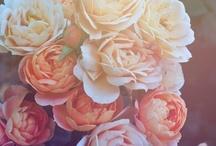 Fleur. / by Melody Minton