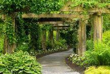 garden tips / by DeLacerda Photography