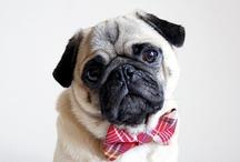 Pugs. Pugs. Pugs. / by Hannah Jones