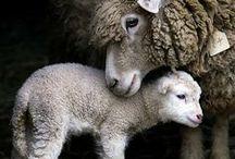 ANIMALS GREAT & SMALL / by Joyce Stoney Ferkler
